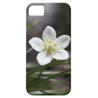 Marsh grass of Parnassus (Parnassia palustris) iPhone 5 Case