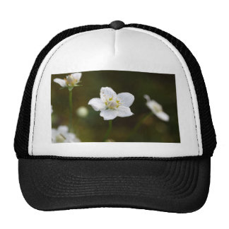 Marsh grass of Parnassus (Parnassia palustris) Trucker Hat