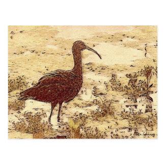 Marsh Ibis Postcard