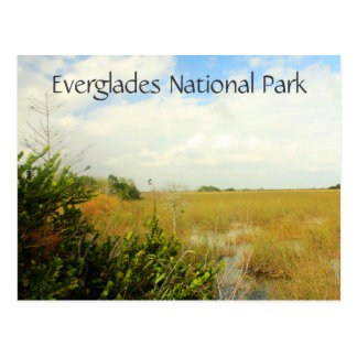 Marsh in Everglades National Park, Florida Postcard