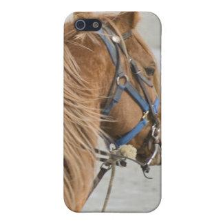 Marsh Tacky iPhone 5 Case
