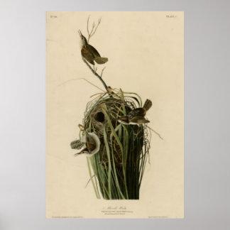 Marsh Wren Poster