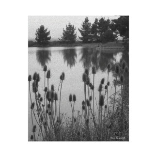 Marshlands of Arcata, CA (in Black and White) Canvas Print