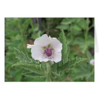 Marshmallow Flower Card