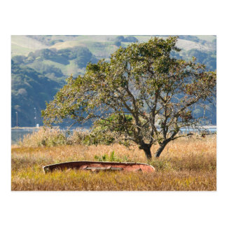 Martinez Shoreline Boat and Tree Postcard
