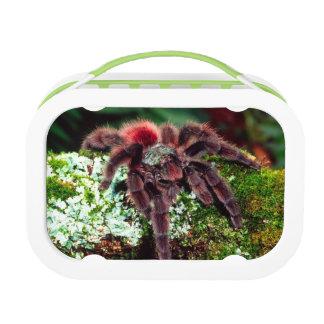 Martinique Tree Spider, Avicularia versicolor, Lunch Boxes