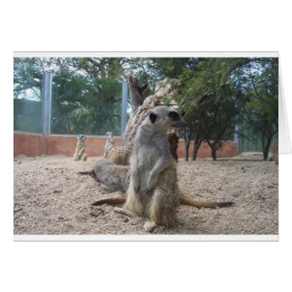Marvelous Meerkats Card