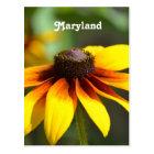 Maryland Black Eyed Susan Postcard