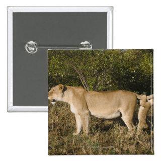 Masai Mara National Reserve, Kenya Pins