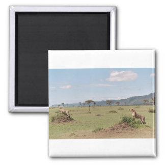 Masai Mara Square Magnet