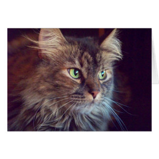 Masquerade Eyes, Maine Coon (blank) Greeting Card