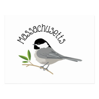 Massachusetts Chickadee Postcard