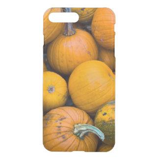Massachusetts, Salisbury, pumpkins, autumn iPhone 7 Plus Case