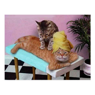 Massage drôle de chat carte postale