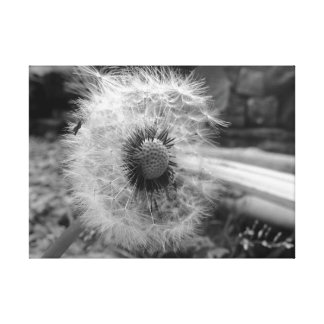 Master of The Dandelions- Canvas
