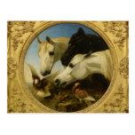 Masterpiece horse & dove painting John Herring Post Card