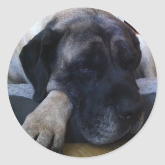 Mastiff Classic Round Sticker