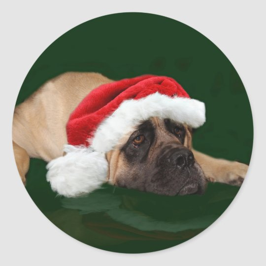 Mastiff in a Santa hat Classic Round Sticker