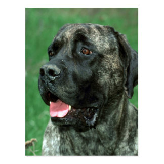 Mastiff, Yarraville's Crown Jewel Postcard
