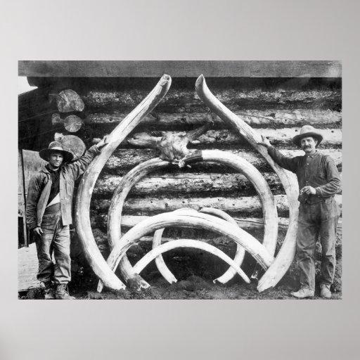 Mastodon Bones: 1900 Poster