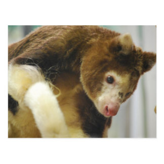 Matchies Tree Kangaroo Postcard