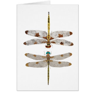 Mated Pair of Prince Baskettail Dragonflies Card