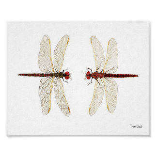 Mated Pair of Variegated Meadowhawks watercolor ar Poster