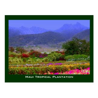 Maui Tropical Plantation West Maui Mountains Postcard