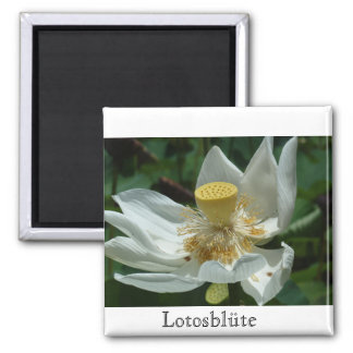 Mauritius, Lotosblüte Magnet