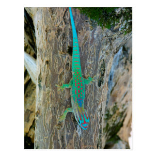 Mauritius Lowland Forest Day Gecko Postcard