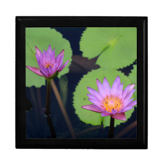 Mauve pink water lilies gift box