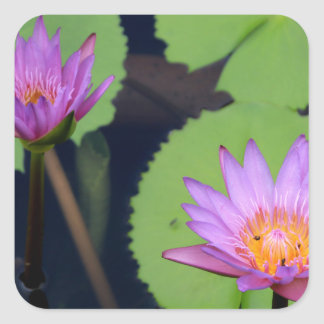 Mauve pink water lilies square sticker