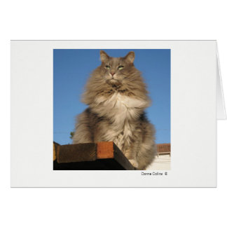 Max the Cat   #-4 Card