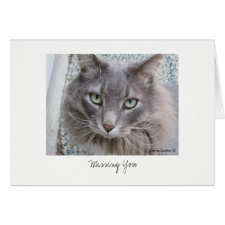Max the Cat #5 Card