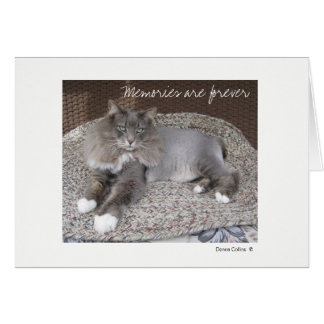 Max the Cat Note card