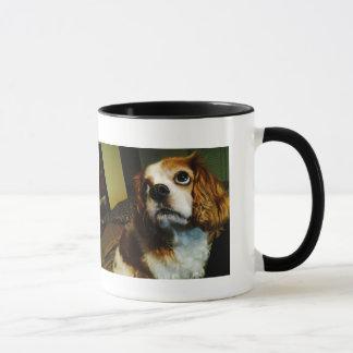 Maxi Moo Cavalier Cup