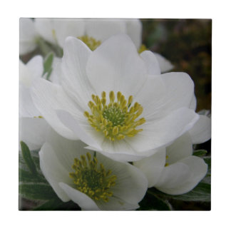 May Flower, Anemone narcissiflora Tile