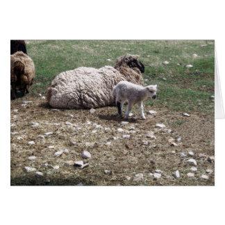 May Lamb And Sheep Card