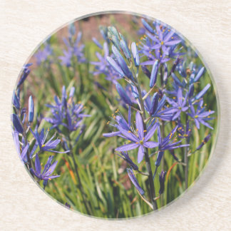 May Night Salvia-z.JPG Drink Coasters