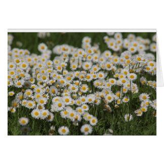 Mayday daisies card
