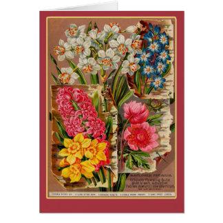 Mayflower Seed Packet Vintage Illustration Card