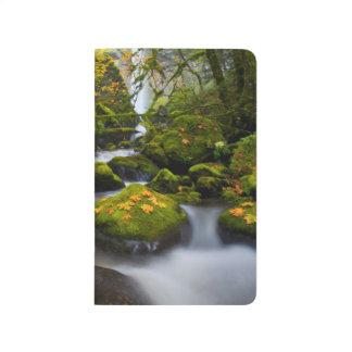 McCord Creek Bigleaf Maple | Columbia Gorge, OR Journal
