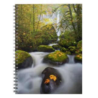 McCord Creek Bigleaf Maple   Columbia Gorge, OR Notebook