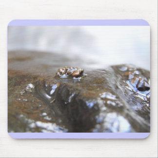 McDonald-Dunn. Oak Creek. Uenoidae Mouse Pad