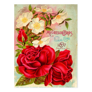 McGregor Bros. Floral Gems Advertisement Postcard