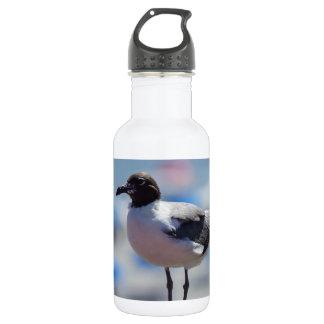 Me A Seagull