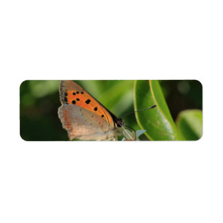 Meadow Brown Return Address Label