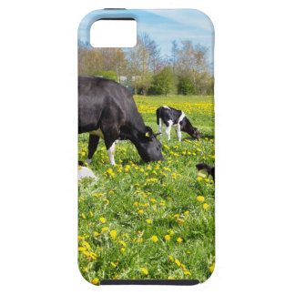 Meadow full of dandelions with grazing cows iPhone 5 case