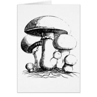 Meadow Mushrooms Note Cards
