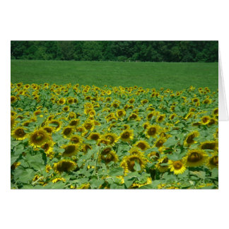 Meadow of Sunflowers Card